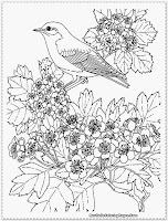 bird coloring pages for girls