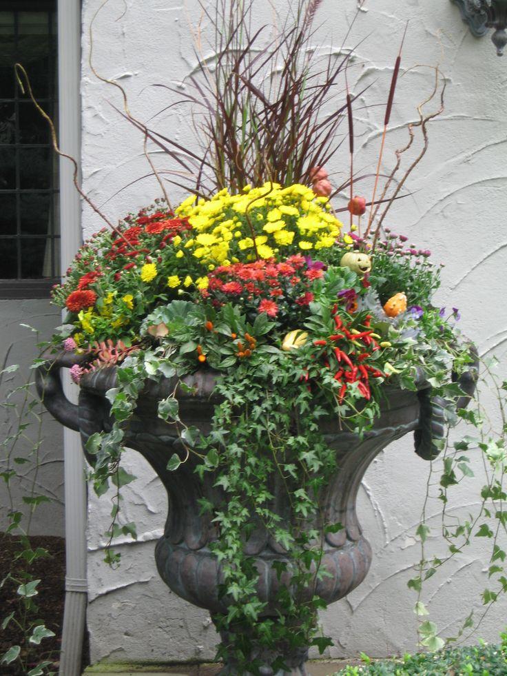 The Garden: Mums Not Always The Word