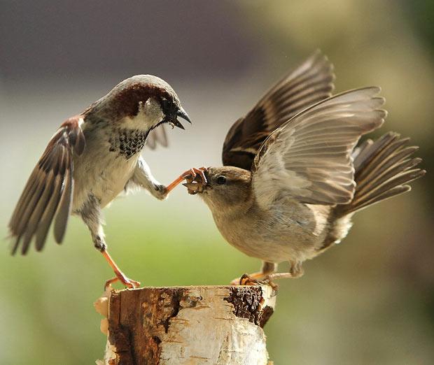 kung-fu-sparrows
