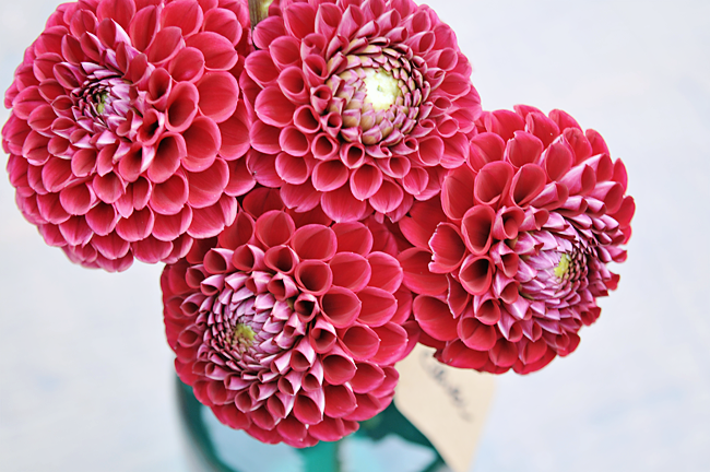how to grow cut flowers