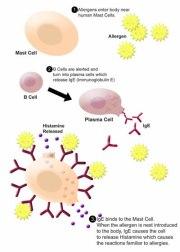 Penyebab, Gejala dan Pengobatan penyakit Autoimun