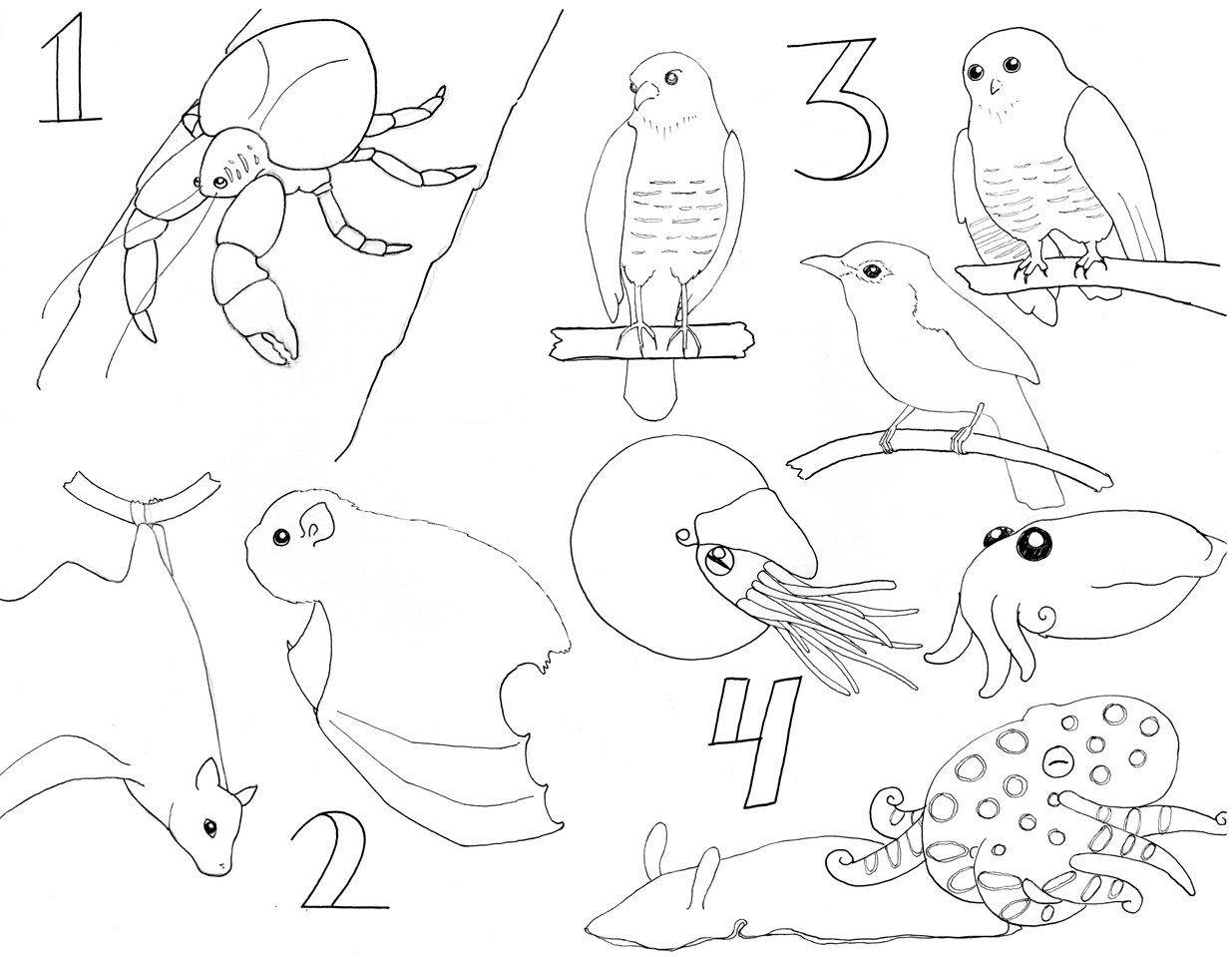 arthropods coloring pages coloring pages. Black Bedroom Furniture Sets. Home Design Ideas