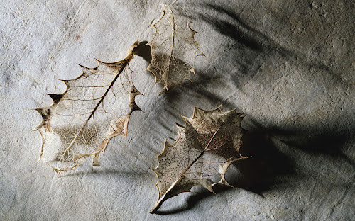 gambar daun kering