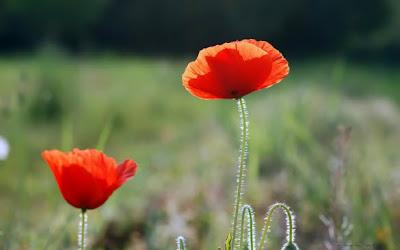Beautiful Flowers Photo Gallery