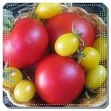 Bayi Sehat Konsumsi Tomat