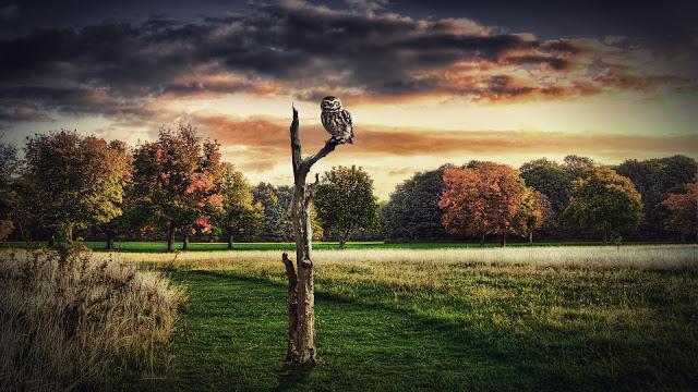 Búho Lechuza descansando en un tronco viejo imagenes de aves exoticas