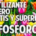 Fertilizante Casero para activar la floración y la formación de raíces - Fosforo
