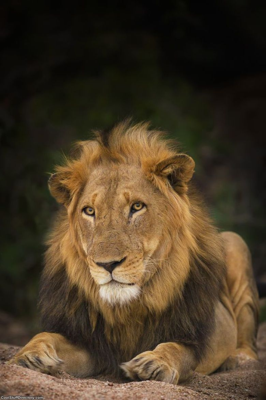 5. Motswari King by Mario Moreno