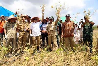 Produksi kedelai Banyuwangi paling tinggi di Indonesia