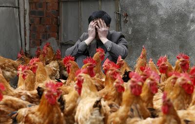 WHO : Flu Burung jenis baru H7N9 salah satu Virus paling mematikan telah muncul di China