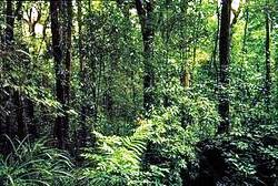 Natural Vegetation and Wildlife Wiki http://www.cbsemaster.org/2011/11/cbse-class-vii-7th-geography-chapter.html