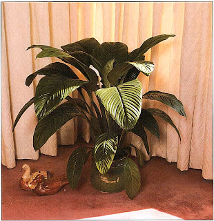 Одно единственное растение возможно, это все, что вам нужно, если оно достаточно выразительно, как этот величественный спатифиллюм