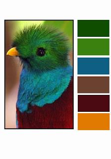 http://3.bp.blogspot.com/-dSjmz64iK5M/UzZPt8ZlfeI/AAAAAAAACk8/cTlpVSf0dPs/s400/Bird+Colour+Palette-001.jpg