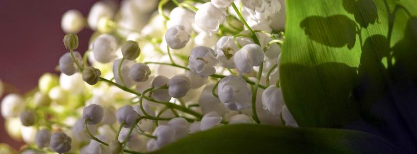 Couverture facebook muguet