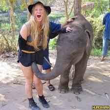 Elefante sortudo