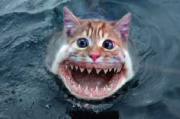 Funny pictures gallery catfish information catfish for Cat fishing 2