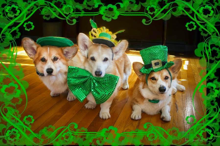 Wishing You A Corgi Licious Saint Patrick S Day The