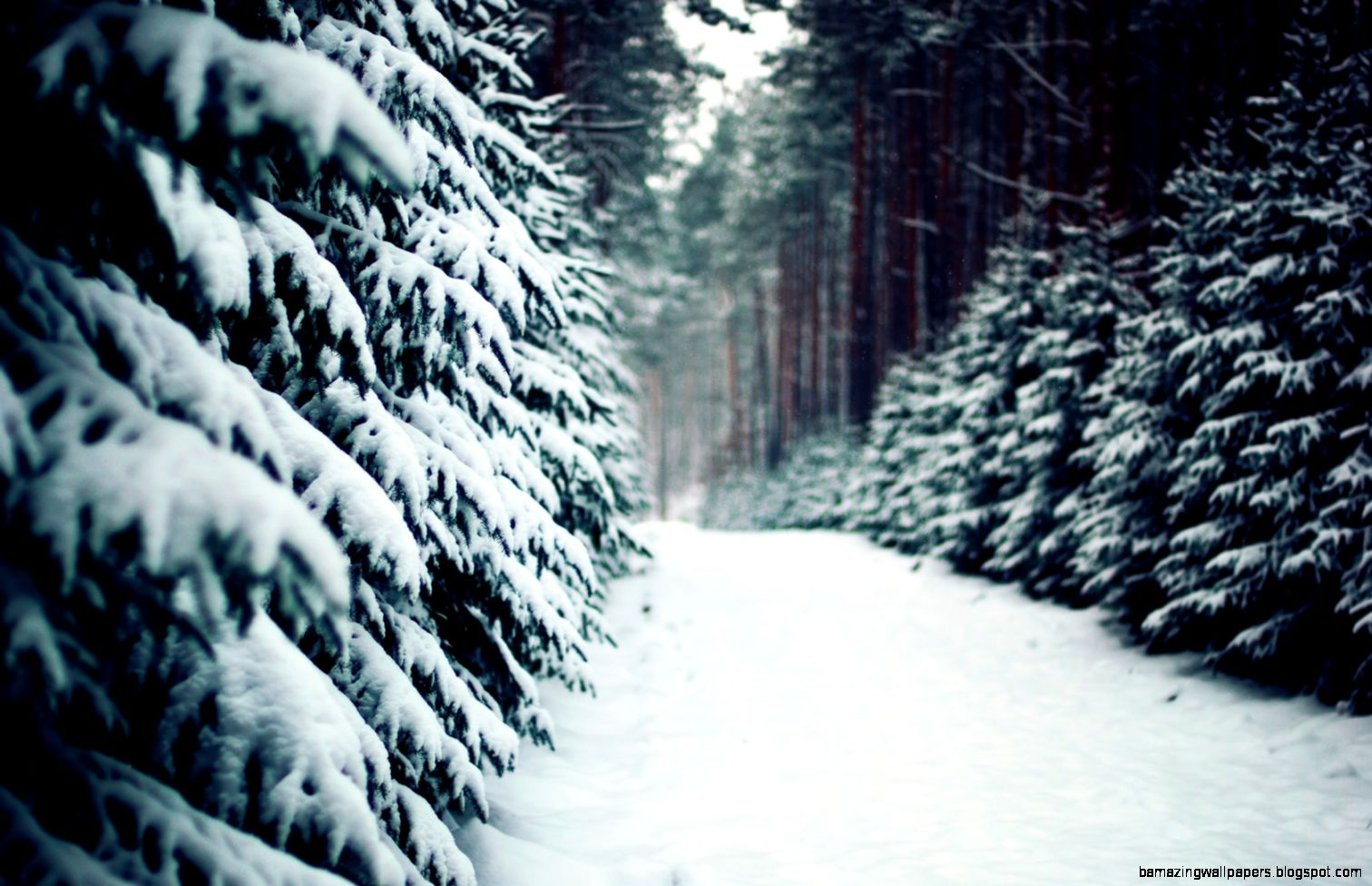 Awesome Winter Snow HD Wallpaper Free Download