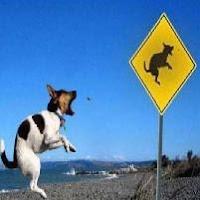 Cachorro canguru