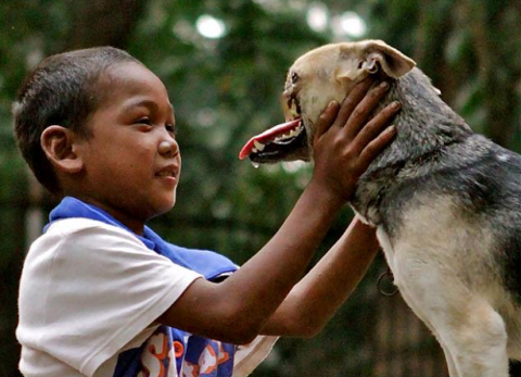 essay on dog euthanasia Euthanasia, the act of causing death painlessly to end pain, is a good idea the f.