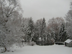 Winter in our backyard...