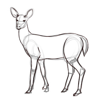 how to draw deer - step 7