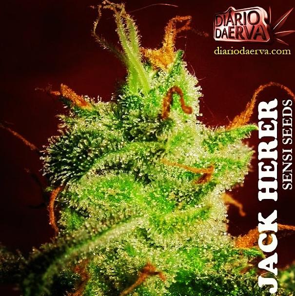 #kusharmy #kush #pot #planetkush #potheadsociety #highlife #highsociety #ffourtwenty #cannabisdestiny #cannabiscommunity #kushgoons #dailycannabis #jackherer #medicated #medicinalmarijuana #maryjane #420photography #420 #w420 #weedstagram420 #dope #bluntculture #bongbeauties #this420 #qualitypot #greenasmoney #grower