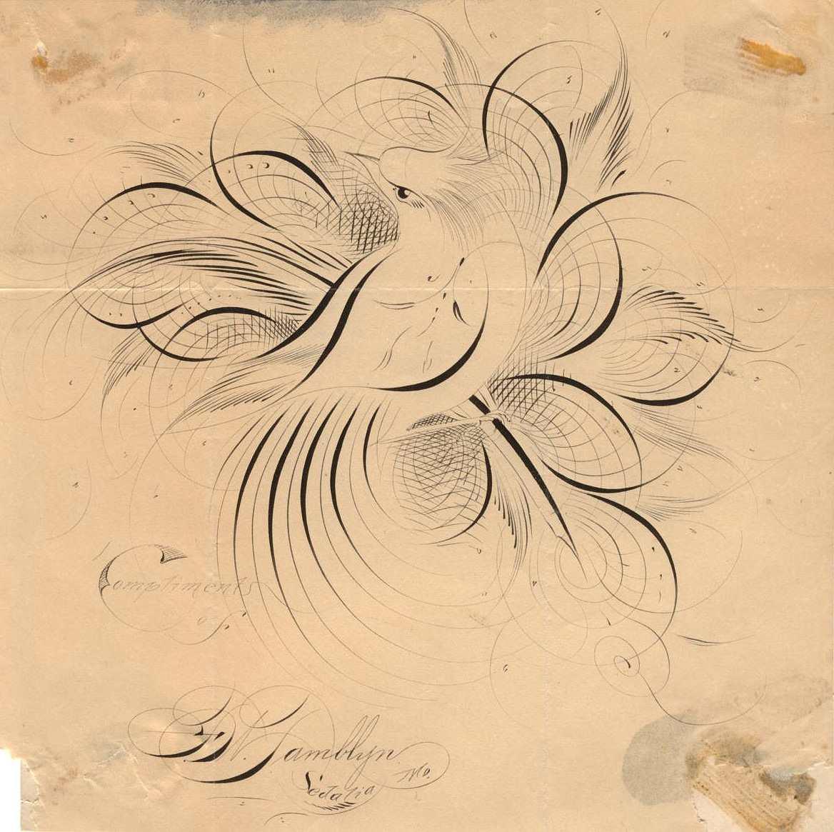 Anne Elser Birds Flourishing Calligraphy Workshop With