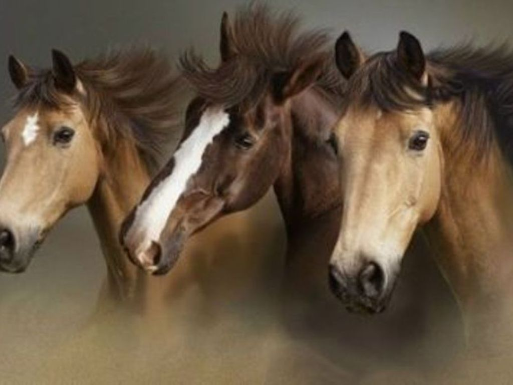Wild horses hd wallpapers wallpaper202