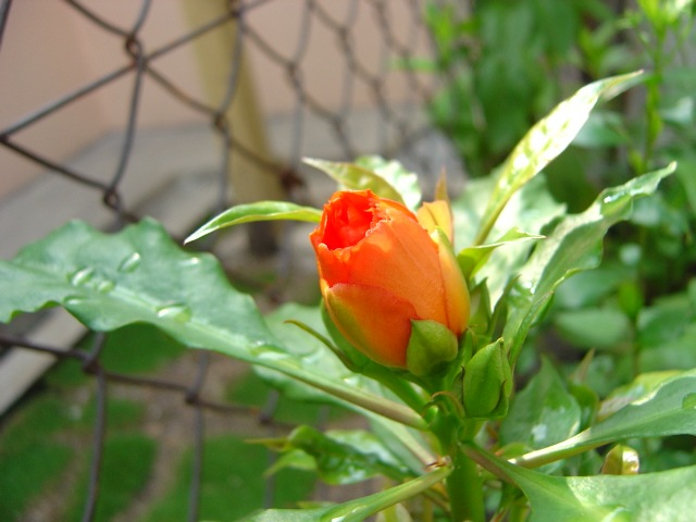 Bunga Adalah Salah Satu Obyek Yang Menarik Untuk Diambil Gambarnya