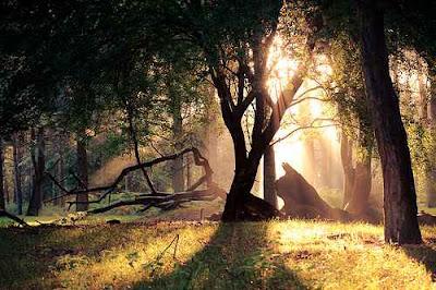 Hình ảnh đẹp mùa thu - đông của rừng