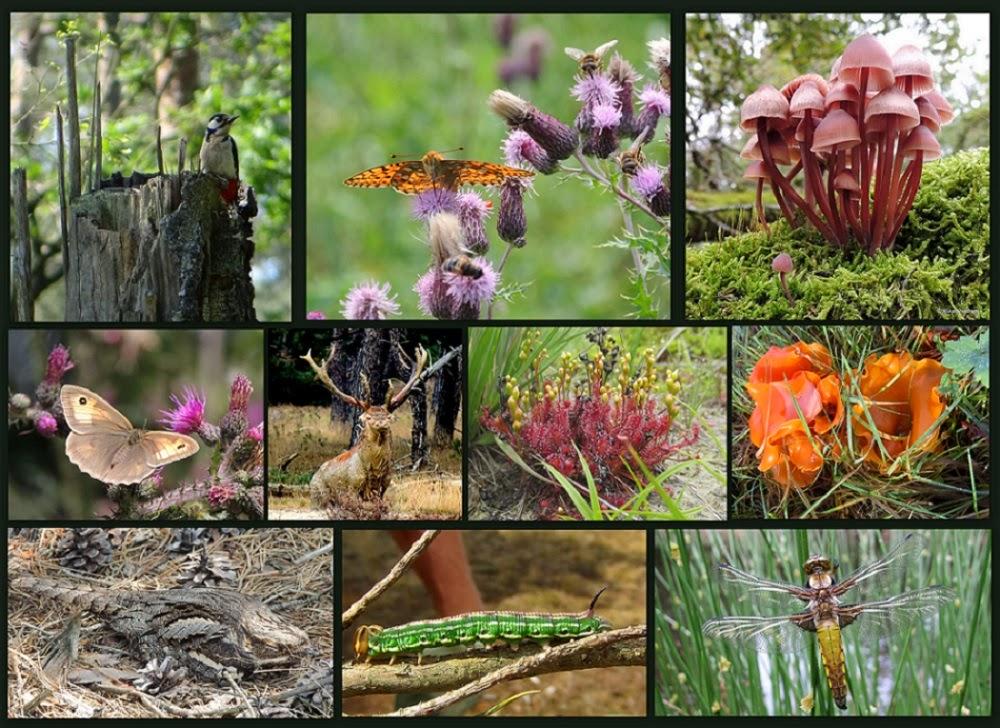 Ruud's natuurblog