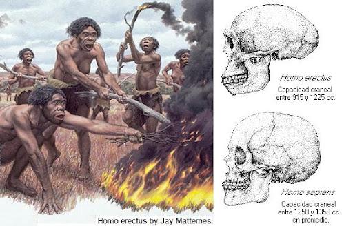 antepasados del hombre Homo erectus