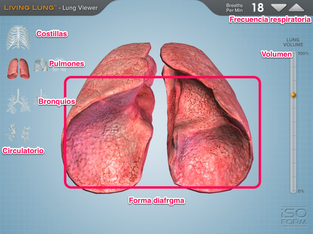 Living lung si respira proyecto guappis for Bedroom y sus partes en ingles