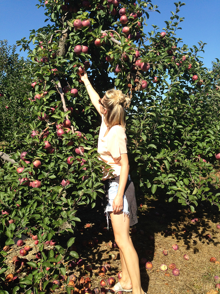 Apple Picking, orchard, fall activity