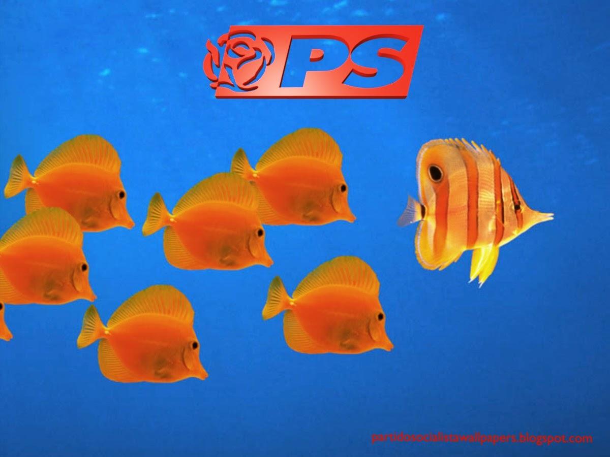Wallpaper do Partido Socialista. Logotipo da Rosa PS frontal em fundo de tela Aquário com Peixes