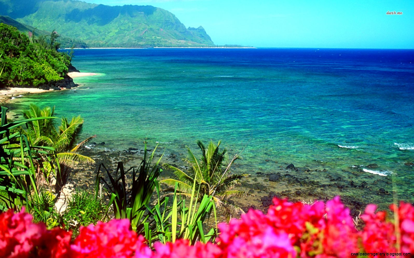 Beach wallpaper Hawaii flowers and Beach flowers on Pinterest