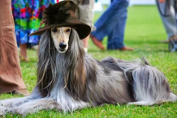funny dog wearing a hat