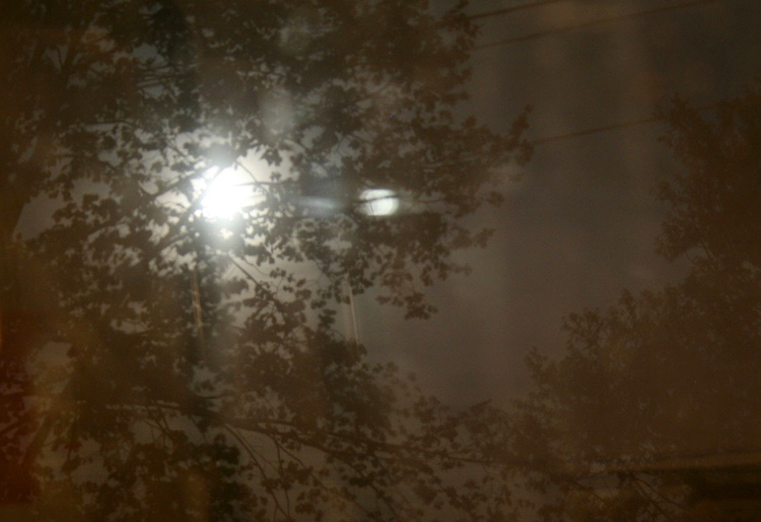 The moon through the trees last night from Room 13