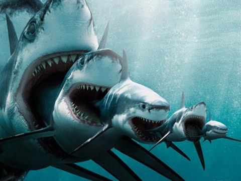[Image: shark-eat-shark.jpg]