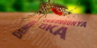 فيروس زيكا , ما هوة فيروس زيكا , زيكا