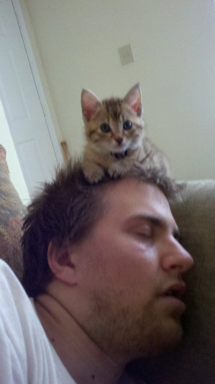 funny cat pictures, kitten on man's head