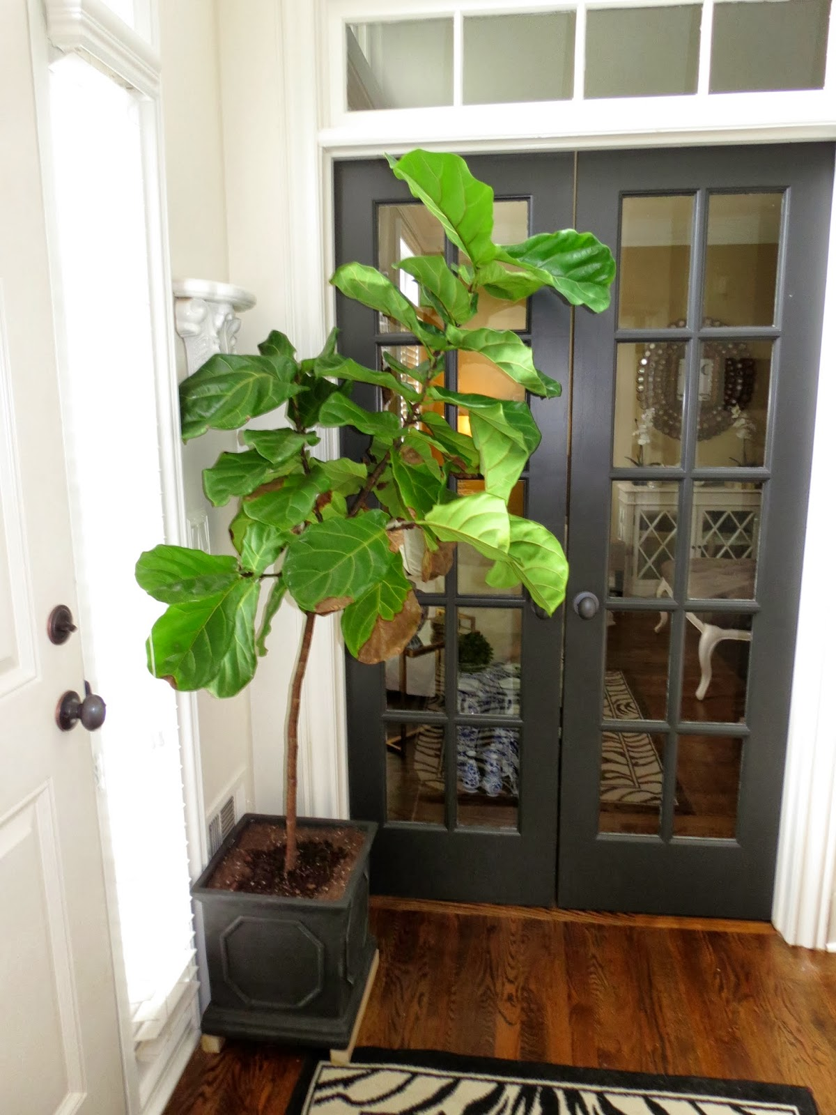 Tiffanyd caring for house plants a fiddle leaf fig story for Room decor ideas with plants