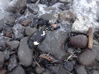 Dead-Birds-In-Alaska-450x337