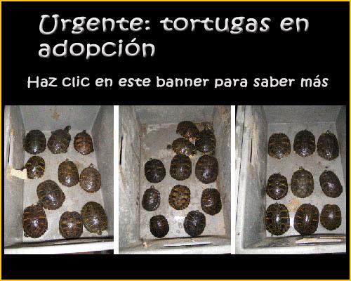 http://www.forotortuga.com/viewforum.php?f=28