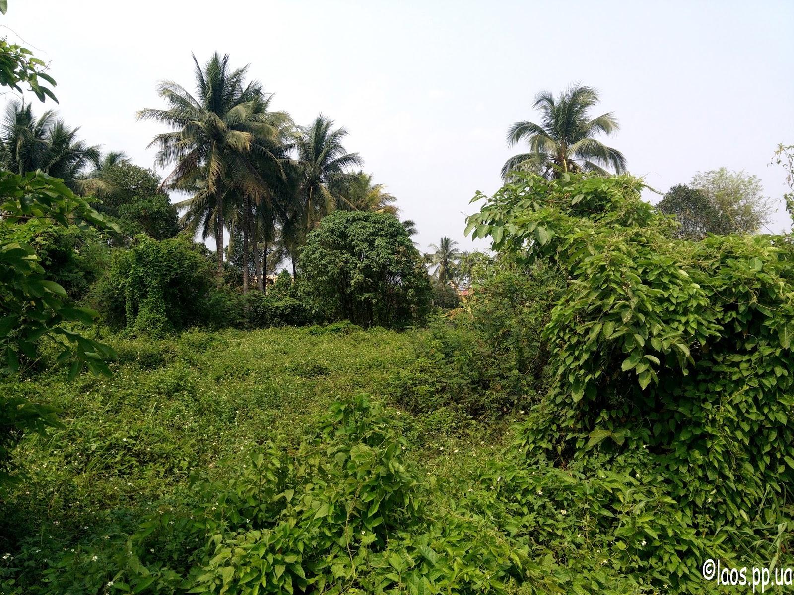 Лаос природа