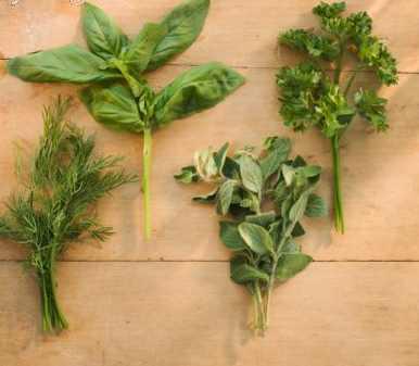 Las cuatro estaciones en tu jard n arom ticas ricos - Plantas aromaticas mediterraneas ...