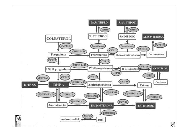 [Imagem: Co%CC%81pia+de+2013+-+MASCULINA++PDF1+%2...ado%29.jpg]