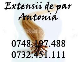 Extensii Antonia