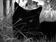 He is also called 'Black Cat' because . black cat wallpapers